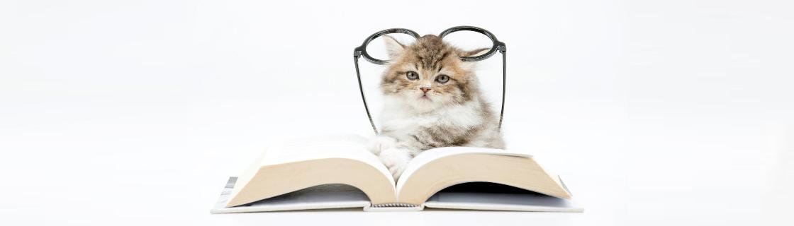 blog-lancamento-de-livros-2016