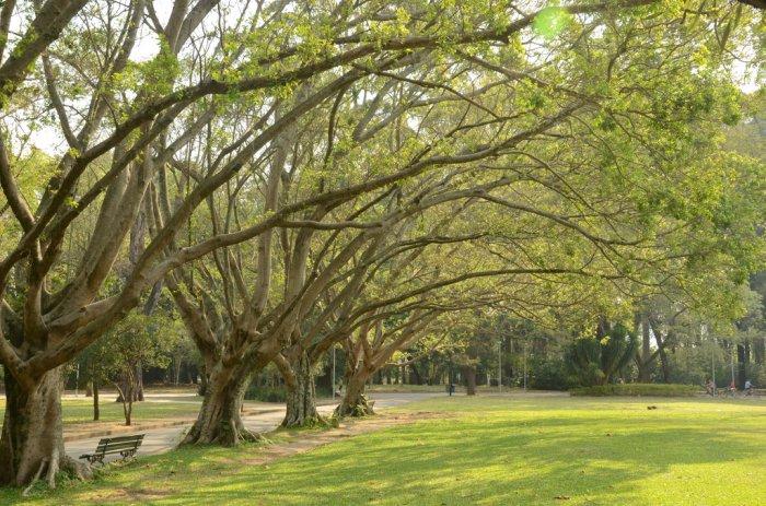 Atividades para idosos no Parque do Ibirapuera